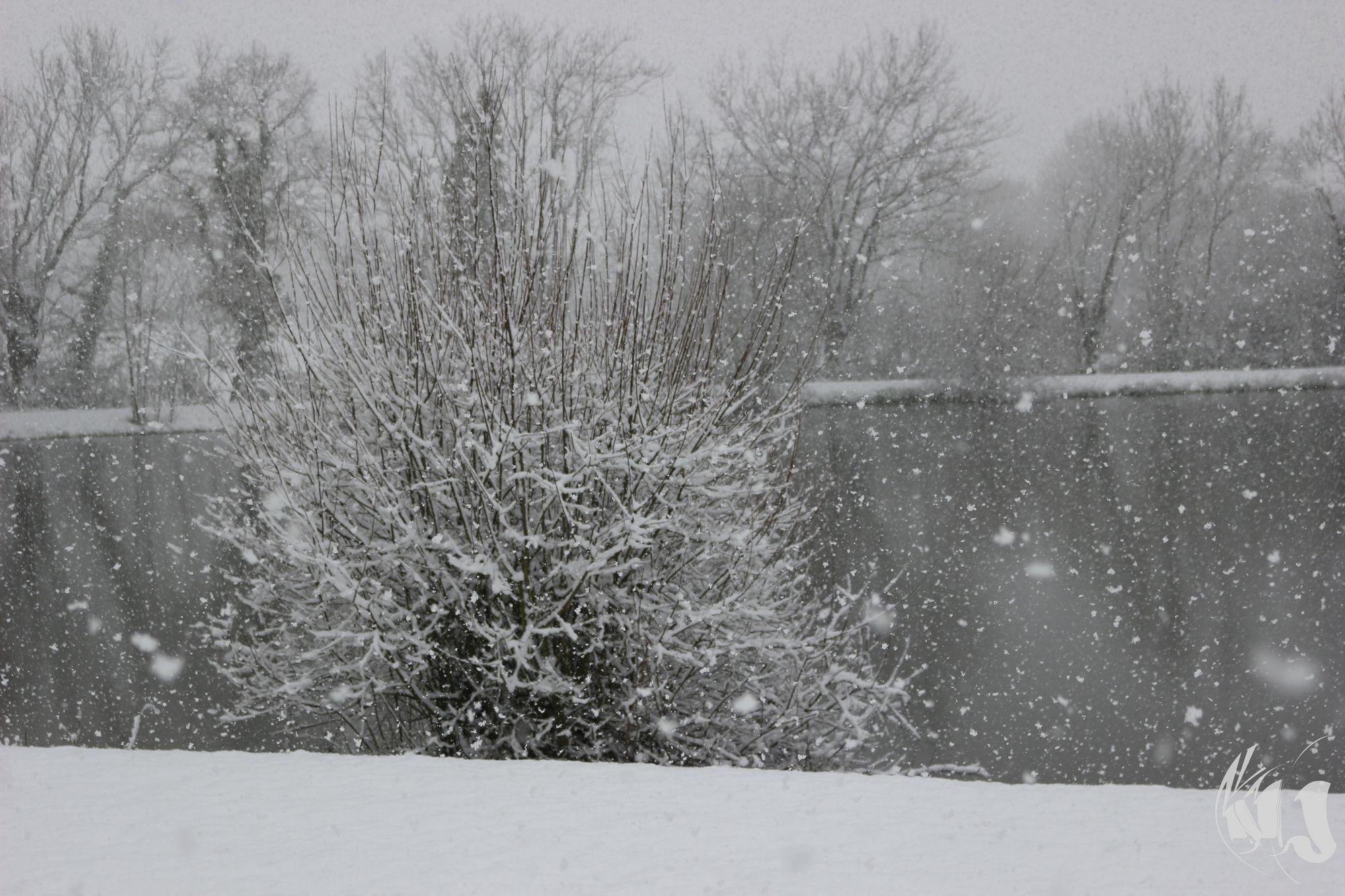 neige Fevrier 2018 (10)