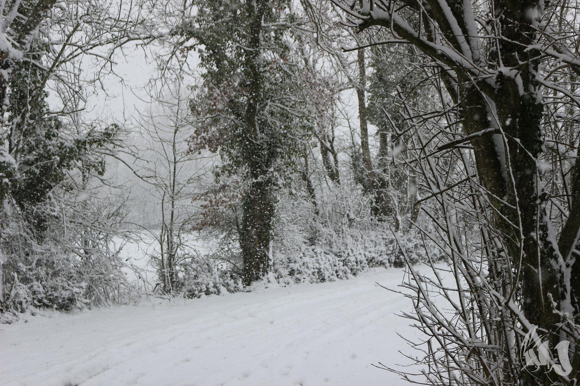 neige Fevrier 2018 (12)