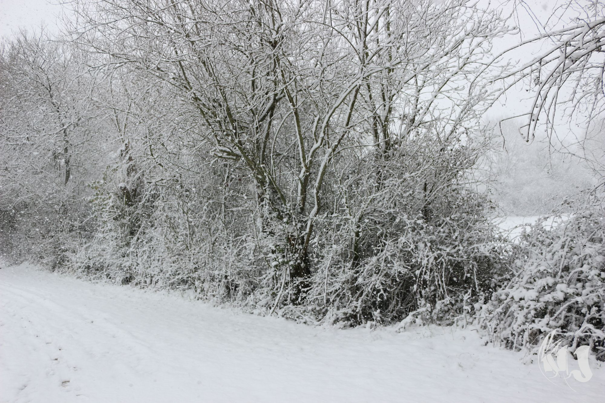 neige Fevrier 2018 (13)