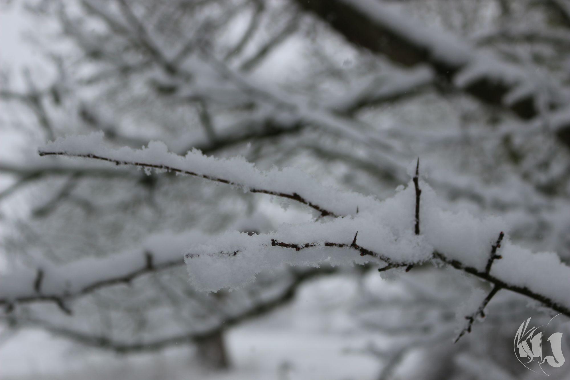 neige Fevrier 2018 (14)