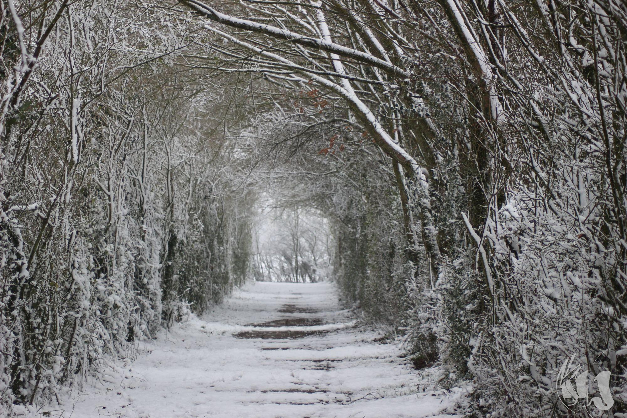 neige Fevrier 2018 (15)