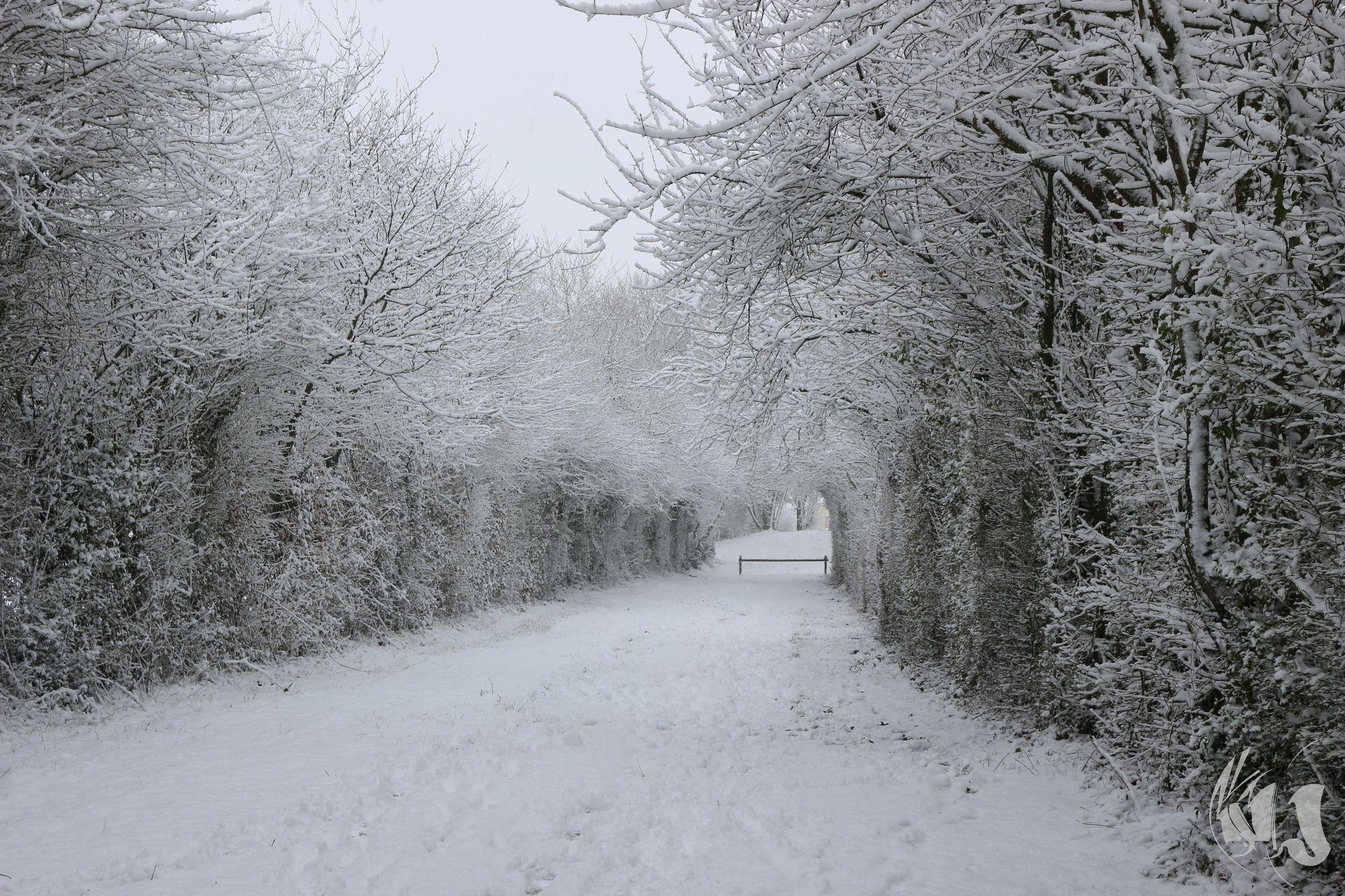 neige Fevrier 2018 (17)