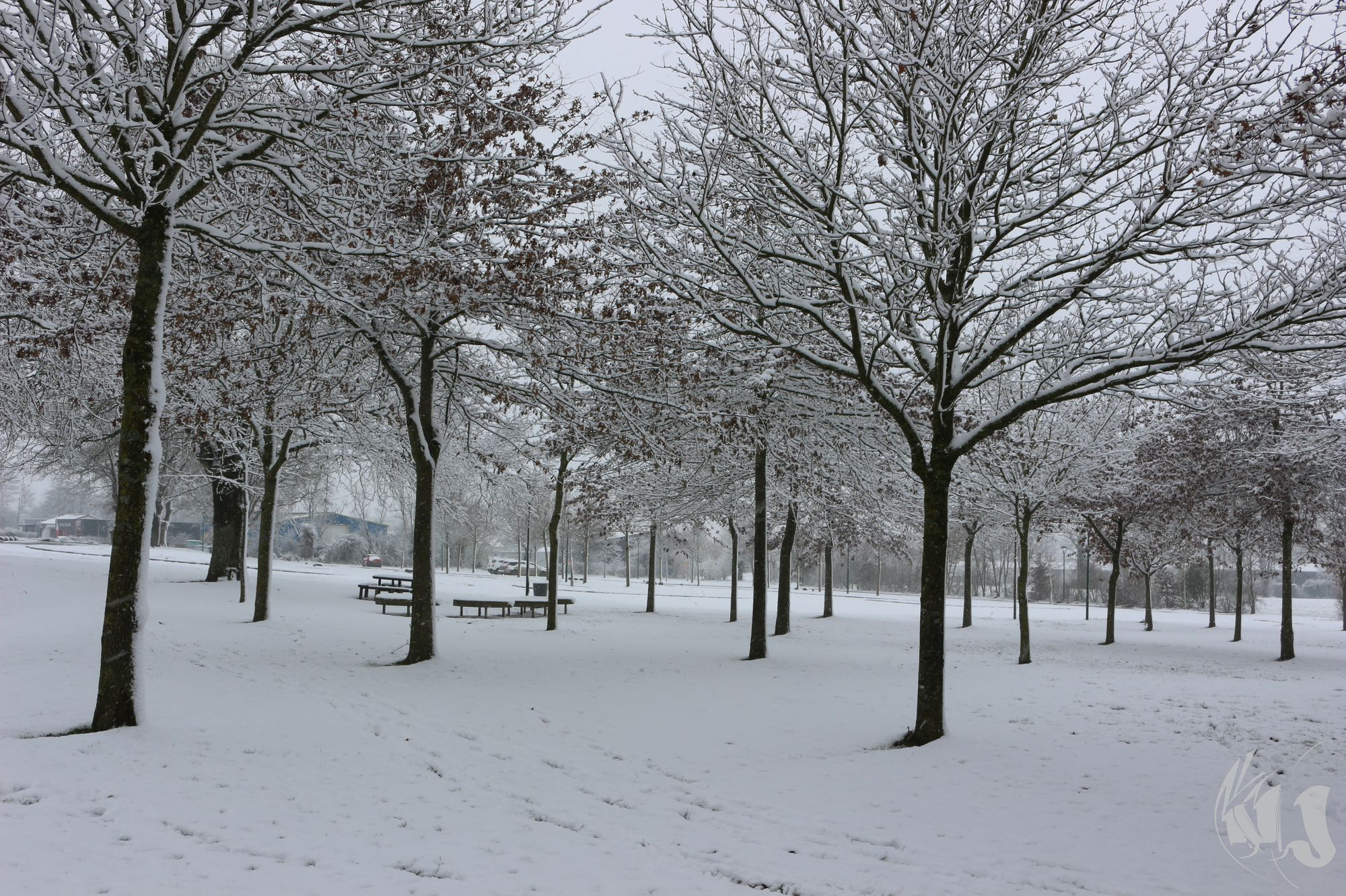neige Fevrier 2018 (18)