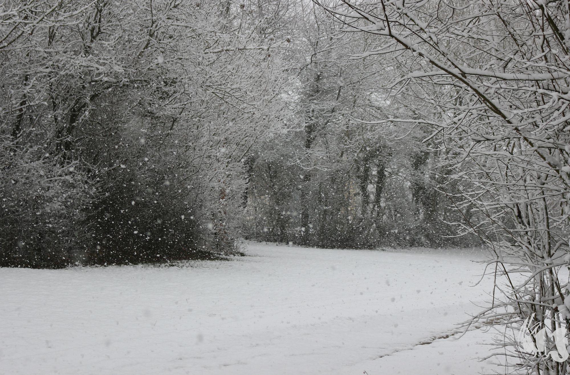 neige Fevrier 2018 (9)